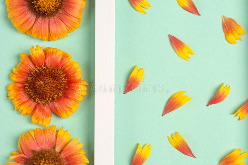 Composition of orange flowers and petals on a mint background. Top view, copy space. Flat lay royalty free stock images