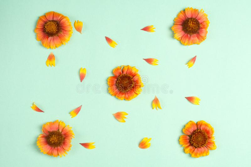 Composition of orange flowers and petals on a mint background. Top view, copy space. Flat lay stock photo