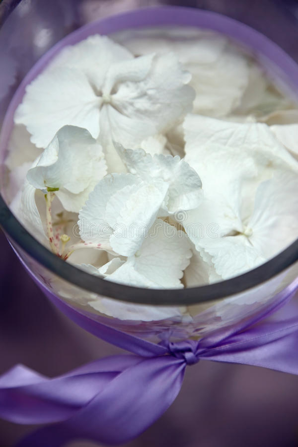 Composition With Orchid Petals Royalty Free Stock Images