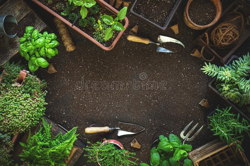 Composition with plants and gardening tools royalty free stock images
