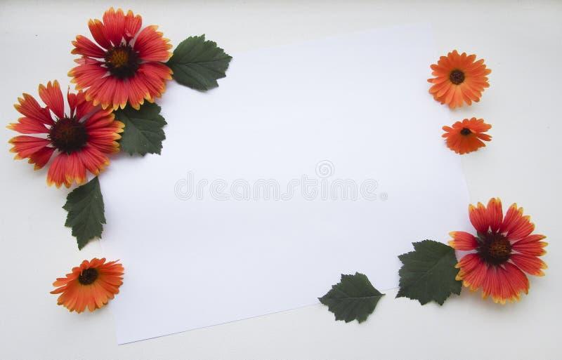 Composition plate en configuration avec le gaillardia et les fleurs et les feuilles de calendula photographie stock