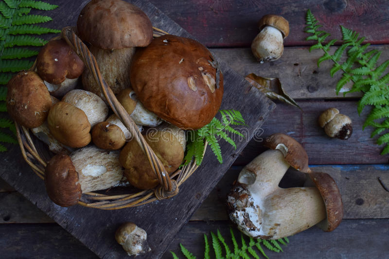 Composition of porcini in the basket on wooden background. White edible wild mushrooms. Copy space for your text. Composition of porcini in the basket on wooden royalty free stock photo