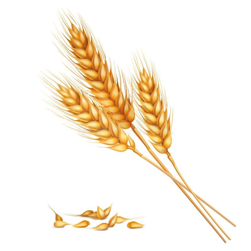 Composition réaliste en blé illustration stock