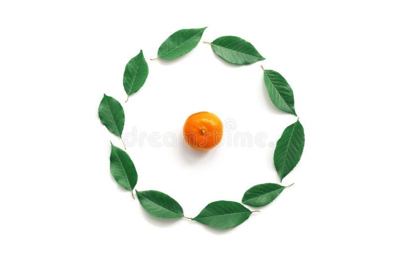 Composition ronde de cadre des feuilles vertes et d'une mandarine sur un fond blanc Vue sup?rieure, configuration plate, l'espace photo stock