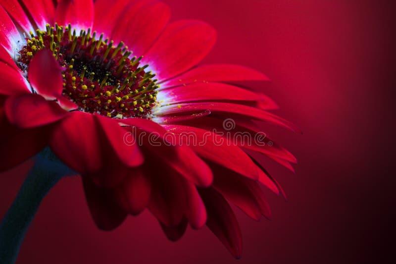 Composition rouge 4. de fleur. images stock