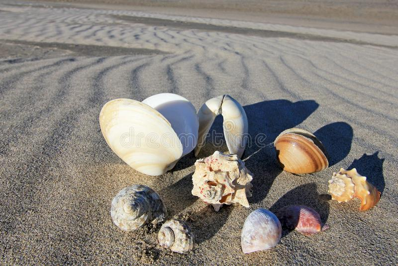 Seashells on the beach of Bahia De Los Angeles, Baja California, Mexico. Composition of seashells on the beach of Bahia De Los Angeles, Baja California, Mexico royalty free stock image