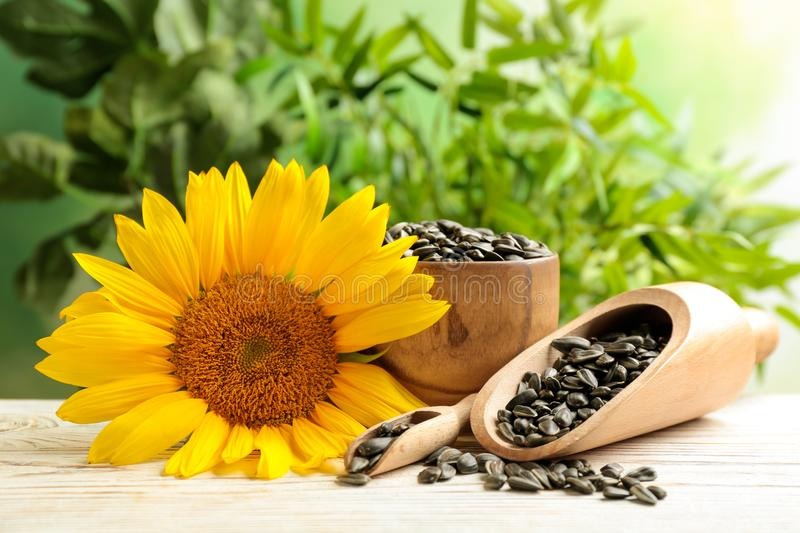 Composition with sunflower seeds. And flower on table stock photography