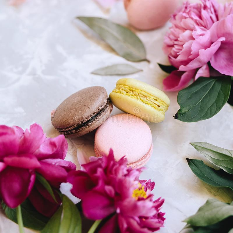 A composition of three multicolored macaroons and pink peony flowers. Close-up on a light background stock photo