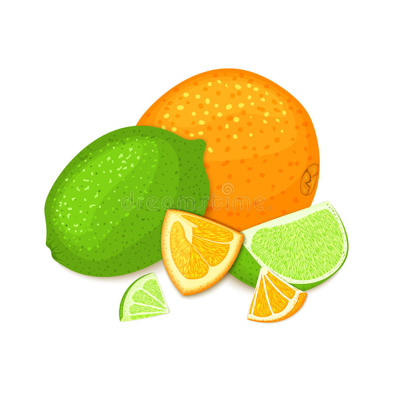 Composition of tropical orange and lime fruits. Ripe vector citrus orange and lemon fruit whole and slice appetizing stock illustration