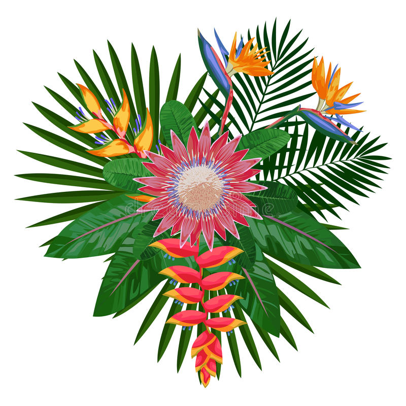 Composition tropicale en bouquet avec le Protea illustration de vecteur