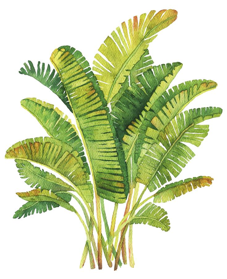 Composition tropicale en feuilles photos stock