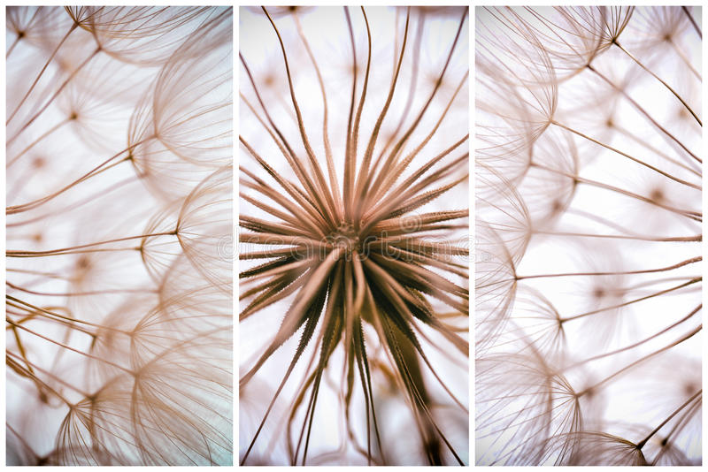 Composition - Vintage watercolor abstract background - monochrome dandelion flower. Extreme closeup with soft focus, beautiful pastel nature details royalty free stock images