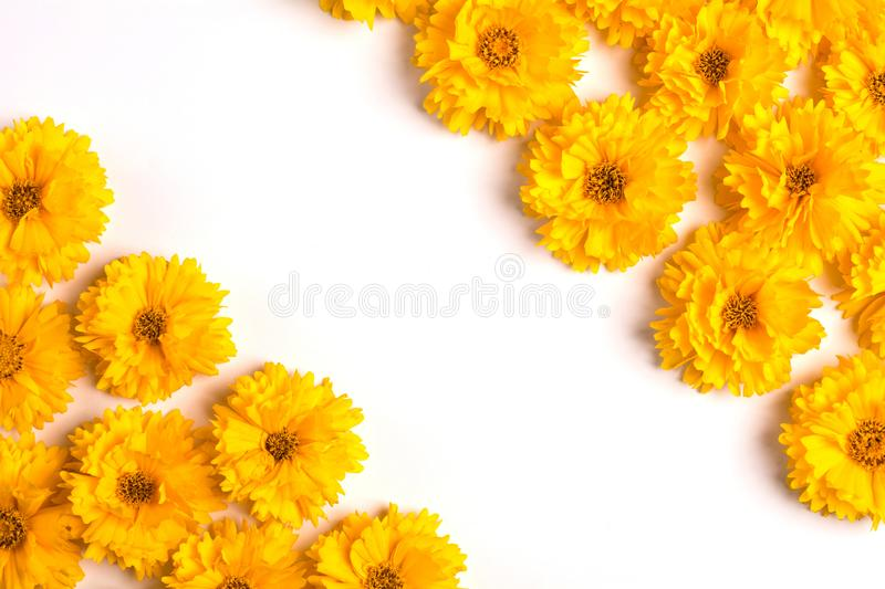 Composition of yellow flowers on a white background. Top view. Flat lay. Copy space stock photo