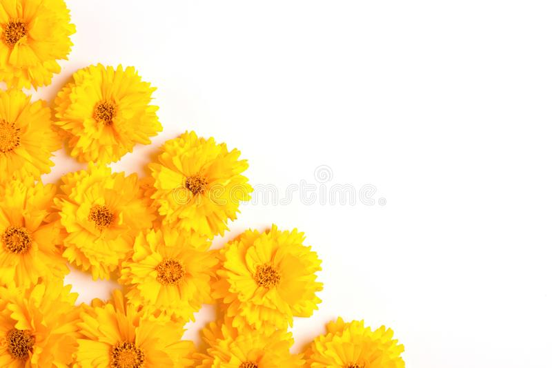 Composition of yellow flowers on a white background. Top view. Flat lay. Copy space royalty free stock image