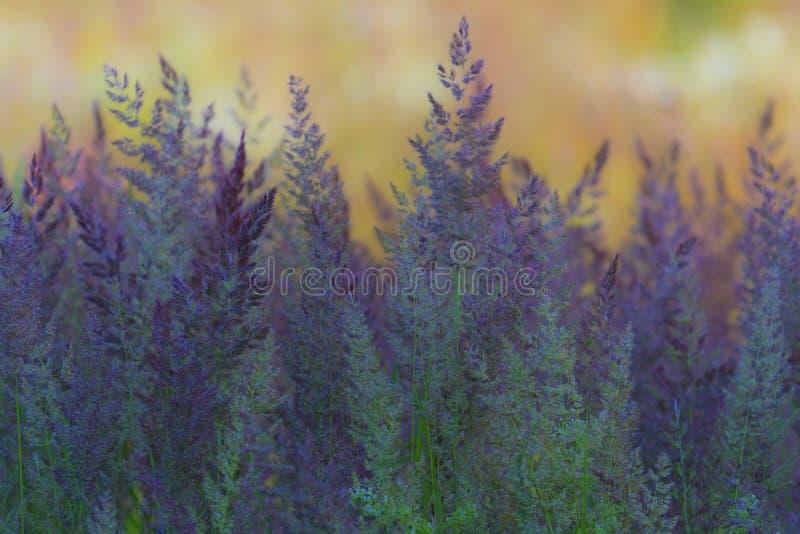 Composizione astratta con erba selvatica fotografie stock