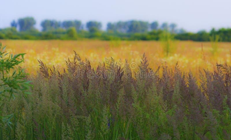 Composizione astratta con erba selvatica immagine stock libera da diritti