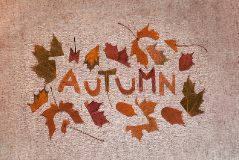 Composizione in autunno con le foglie immagini stock libere da diritti