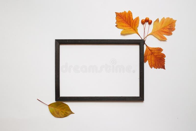 Composizione in autunno, disposizione piana Struttura di legno della foto con le foglie di autunno fresche su fondo bianco con la immagine stock libera da diritti
