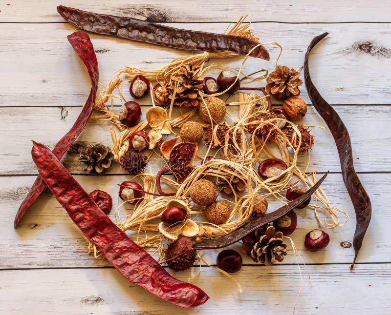 Composizione in autunno Frutta, castagne, coni e dadi dell'acacia su briciolo fotografie stock