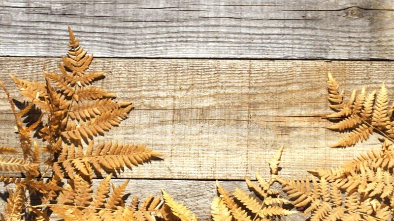 Composizione in autunno Pagina delle foglie asciutte di autunno su un fondo di legno Posto alla copia immagini stock