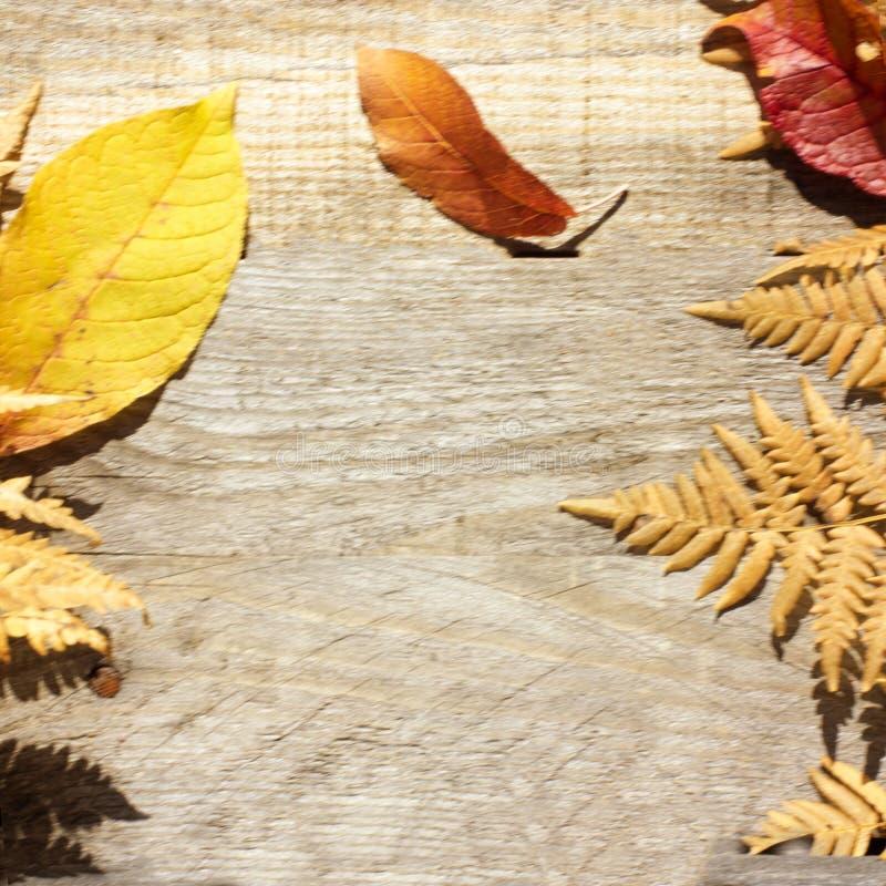 Composizione in autunno Pagina delle foglie asciutte di autunno su un fondo di legno Posto alla copia fotografia stock libera da diritti