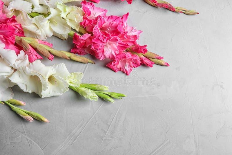 Composizione con i bei fiori di gladiolo immagini stock libere da diritti