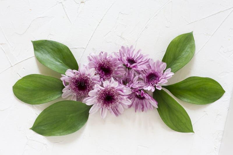 Composizione dei fiori e delle foglie verdi del crisantemo sulla disposizione piana del fondo bianco fotografie stock libere da diritti
