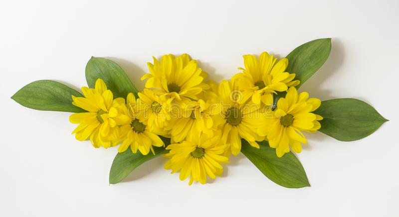 Composizione dei fiori gialli del crisantemo su un fondo bianco Pasqua, molla, concetto di estate Posizione piana, cima fotografia stock libera da diritti
