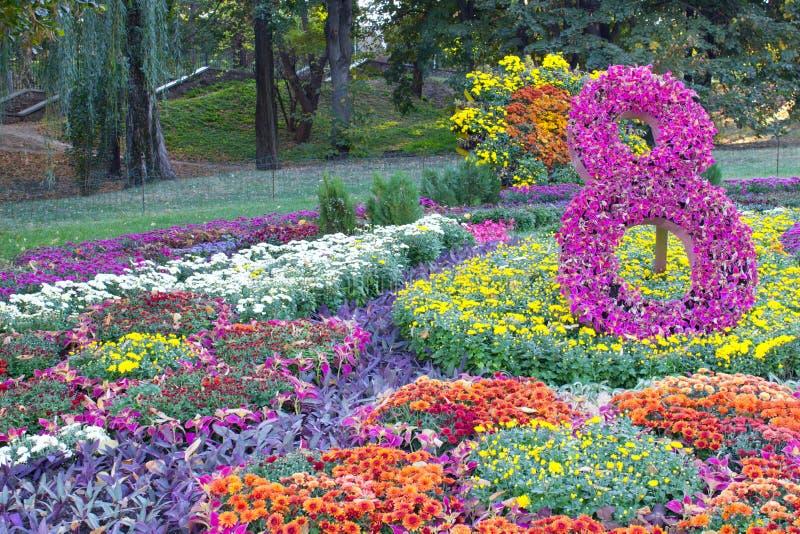 Composizione del crisantemo fotografie stock