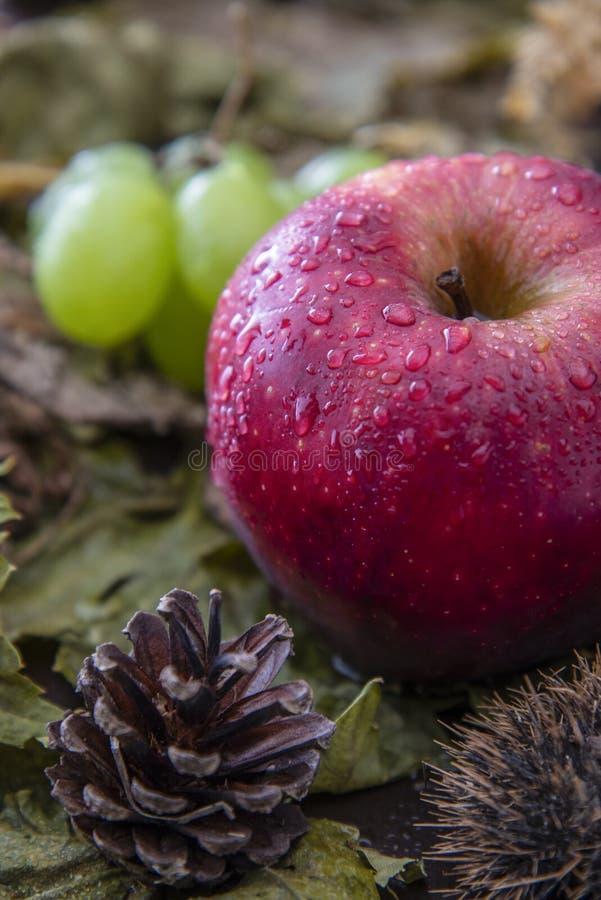 Composizione del genere differente di frutta fotografia stock
