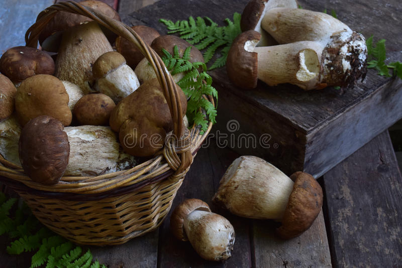 Composizione del porcini nel canestro su fondo di legno Funghi selvaggi commestibili bianchi copi lo spazio per il vostro testo fotografie stock libere da diritti