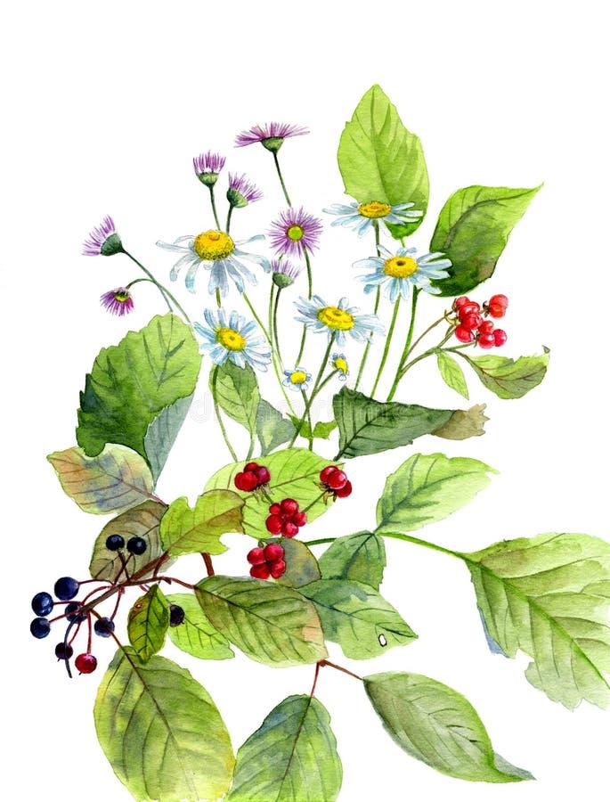 Composizione dell'acquerello dei fiori e bacche e foglie verdi fotografie stock libere da diritti
