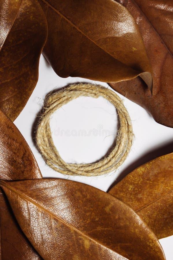 Composizione della magnolia marrone asciutta delle foglie for Magnolia pianta prezzi