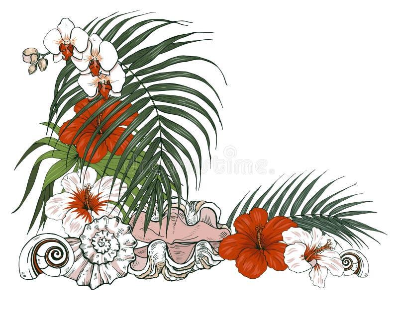 Composizione delle conchiglie e delle piante tropicali illustrazione vettoriale