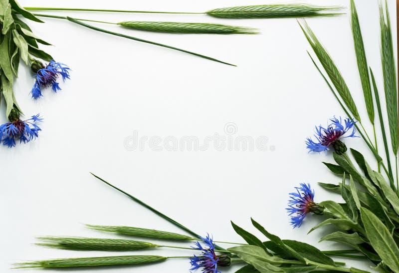 Composizione di Flatlay delle piante del campo: fiordalisi ed orecchie della segale fotografie stock libere da diritti
