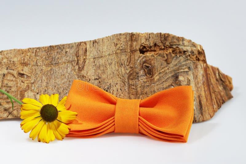 Composizione: Farfallino arancio esagerato, fiore giallo e pezzo di legname segato su un fondo bianco fotografia stock