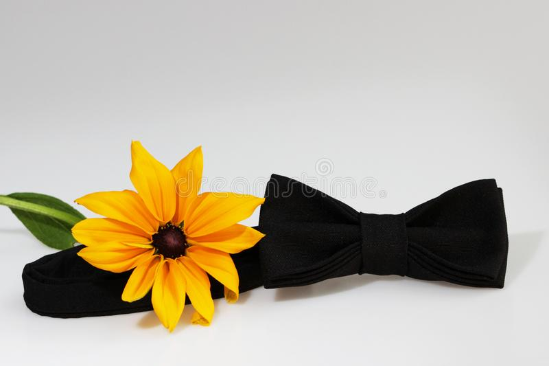 Composizione: Farfallino classico ufficiale nero esagerato e fiore giallo su un fondo bianco immagini stock libere da diritti