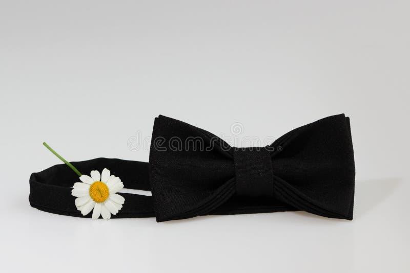 Composizione: Farfallino classico ufficiale nero esagerato, piccolo fiore del crisantemo simile alla camomilla su un fondo bianco fotografie stock libere da diritti