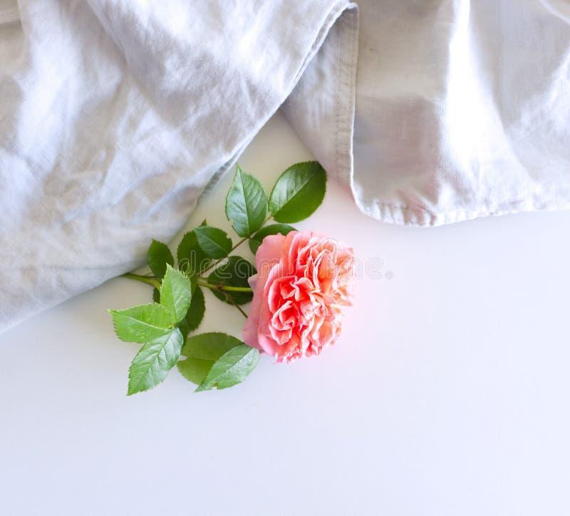 Composizione femminile in natura morta di nozze Scena con la rosa rosa Disposizione piana, vista superiore, spazio della copia immagine stock