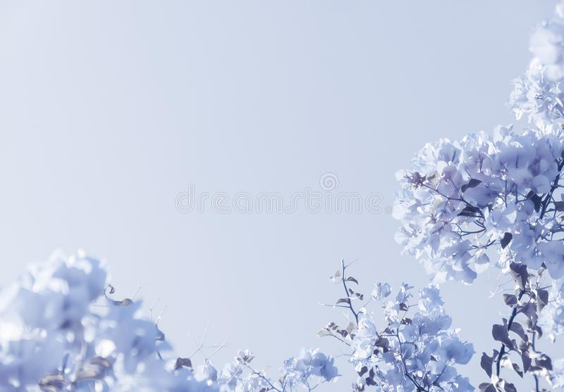 Composizione floreale blu immagini stock