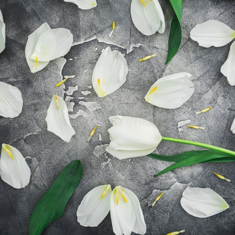 Composizione floreale fatta dei tulipani bianchi su fondo scuro Disposizione piana, vista superiore immagine stock