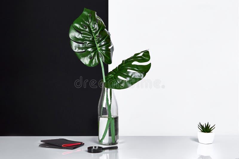 composizione Foglie verdi in bottiglia su fondo bianco e nero Vista frontale, spazio della copia fotografie stock
