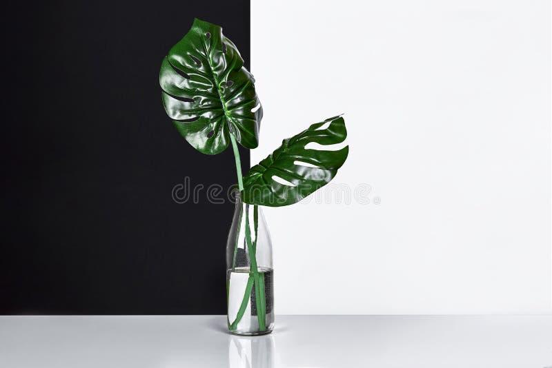 composizione Foglie verdi in bottiglia su fondo bianco e nero Vista frontale, spazio della copia immagini stock libere da diritti