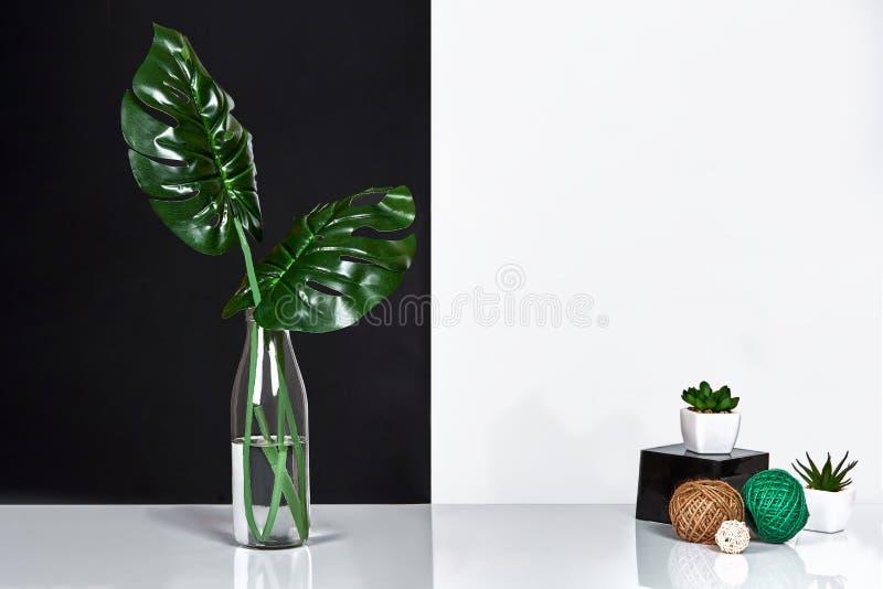 composizione Foglie verdi in bottiglia su fondo bianco e nero Vista frontale, spazio della copia fotografie stock libere da diritti