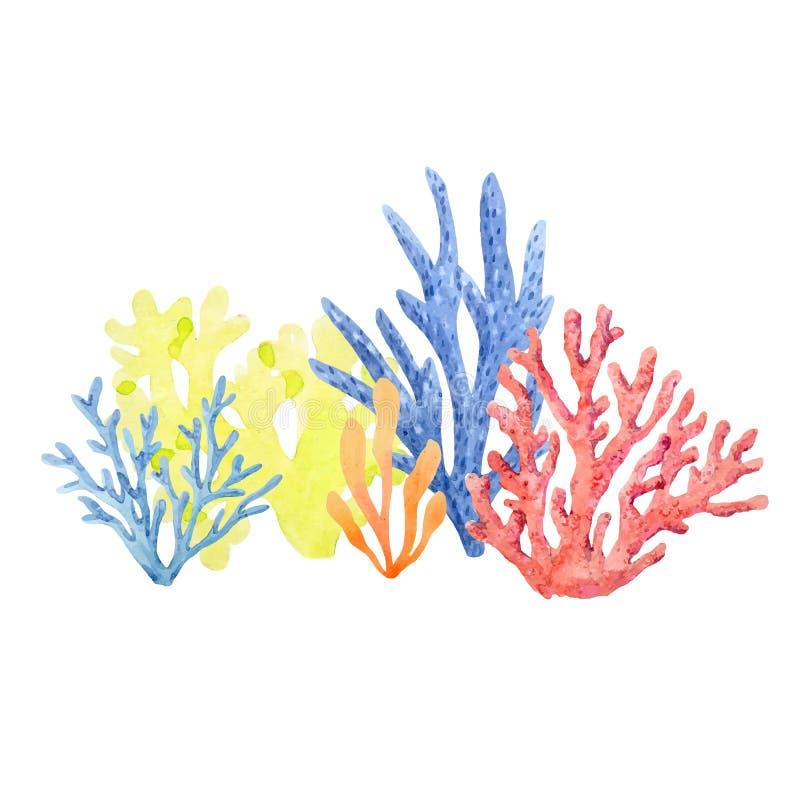 Composizione nel corallo dell'acquerello illustrazione vettoriale