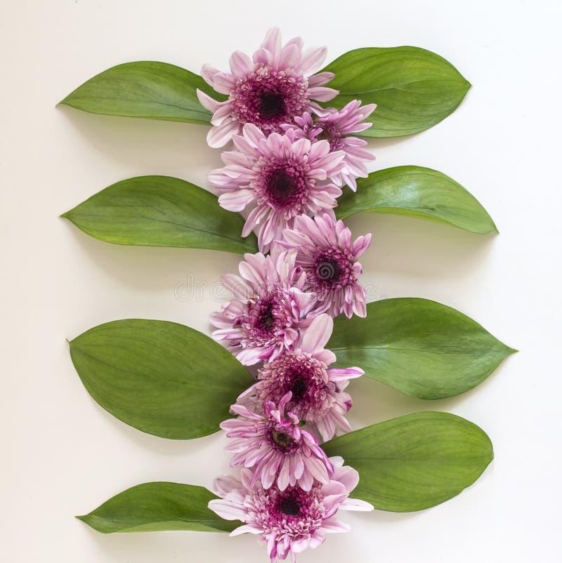 Composizione nel crisantemo con le foglie verdi su un fondo bianco Pasqua, molla, concetto di estate Posizione piana, cima immagine stock