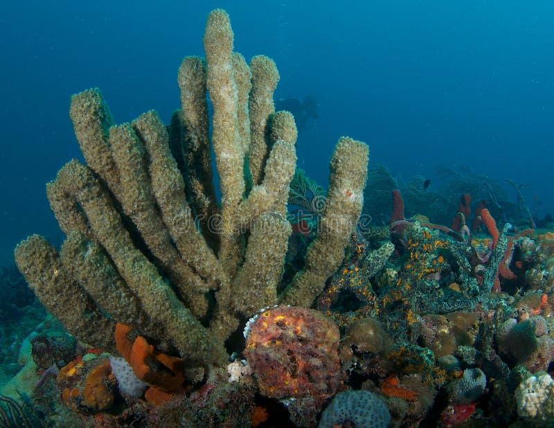 Composizione nella barriera corallina. immagini stock libere da diritti
