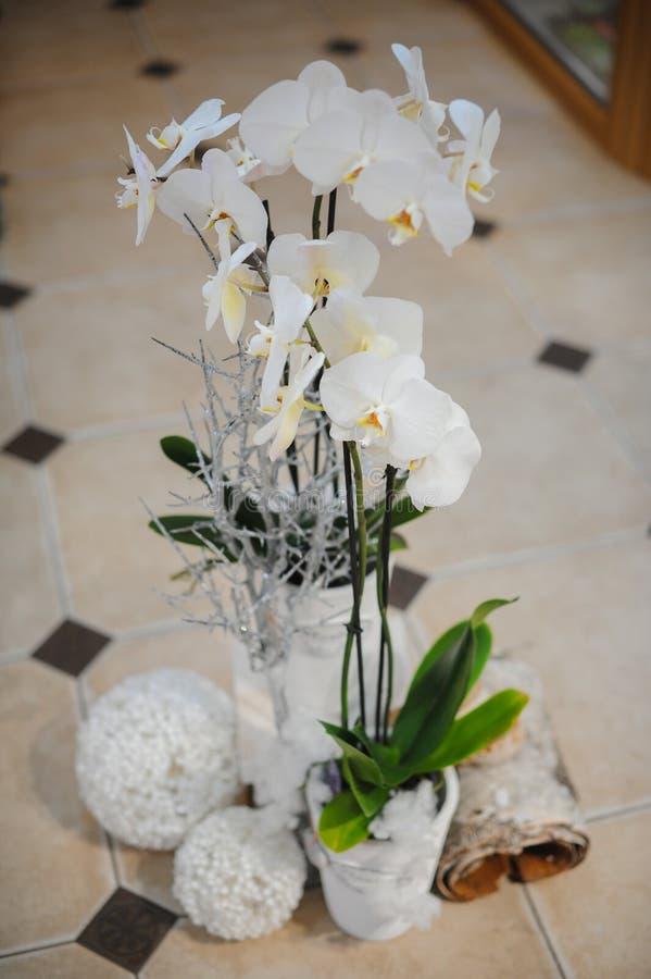 Composizione nella decorazione di inverno con l 39 orchidea - Come curare un orchidea in casa ...