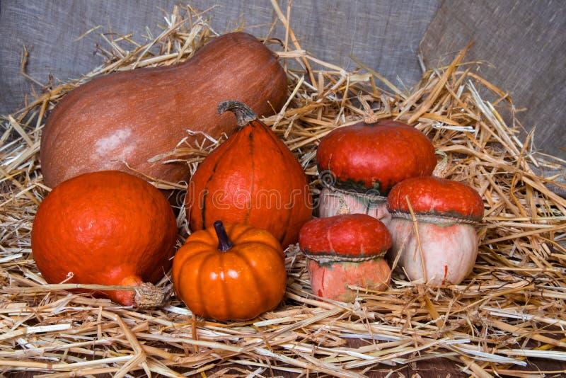 Composizione nella zucca di Halloween nella paglia immagini stock