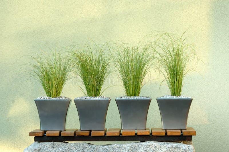 Composizione nelle piante verdi immagine stock libera da diritti